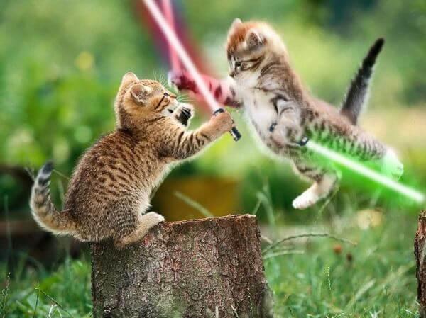 猫ジェダイと猫シスたちの死闘